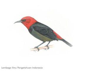 LIPI_Burung Jenis Baru