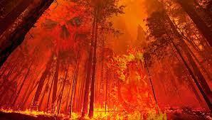 Pixabay_Ilustrasi Kebakaran Hutan