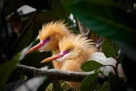 Pixabay_Ilustrasi Photo Burung Indonesia