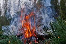 Pixabay_Hutan Terbakar