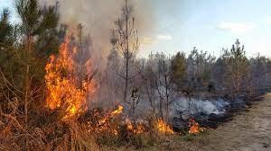 Pixabay_Ilustrasi Kebakaran Hutan I