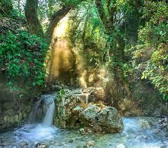 Pixabay_Ilustrasi Rainforest